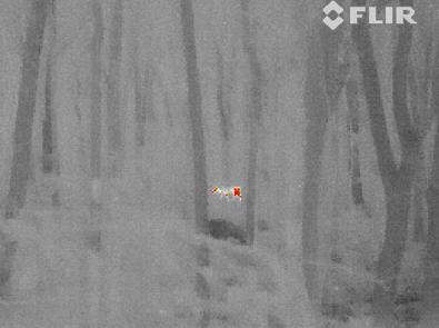 infrared elk